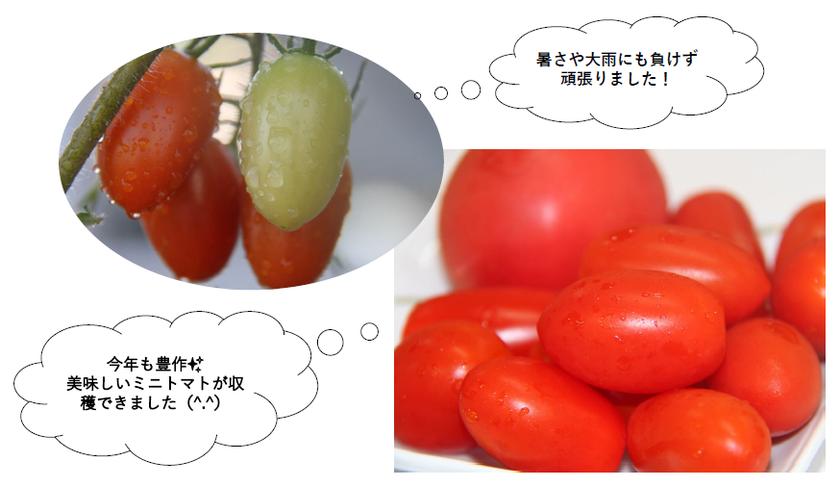 収穫.png