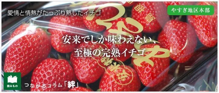 安来でしか味わえない、至極の完熟イチゴ