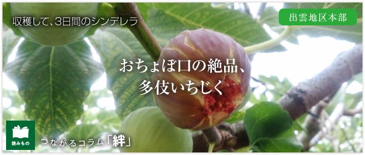 つながるコラム「絆」 vol.4 おちょぼ口の絶品、多伎いちじく